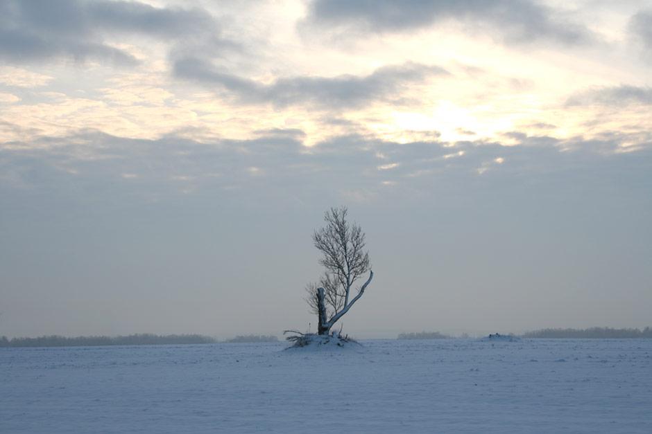Winter Tree on Winter Day - Free Stock Photo