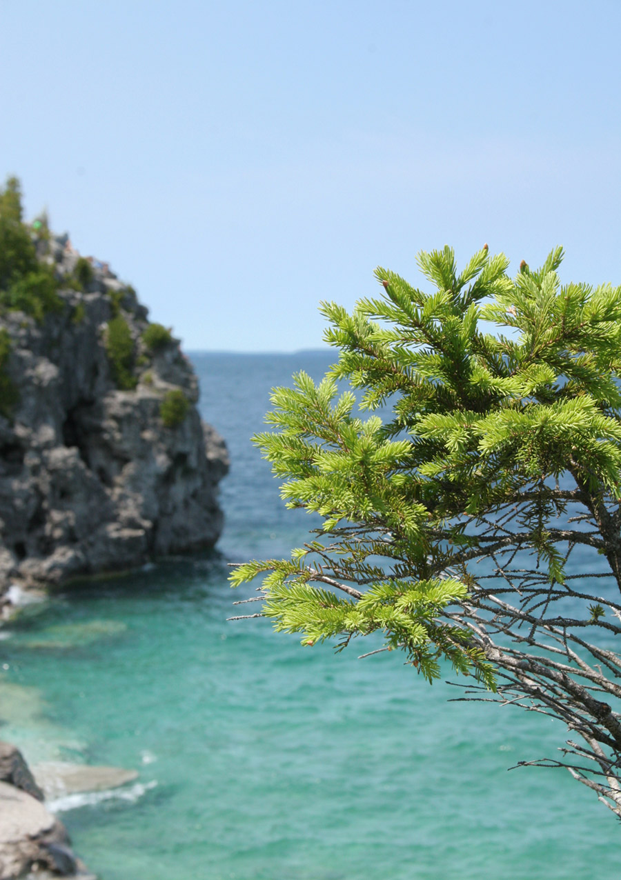 The pine branches on the edge of Lake - Free Stock Image